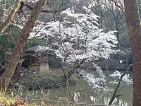 Ikeyoko